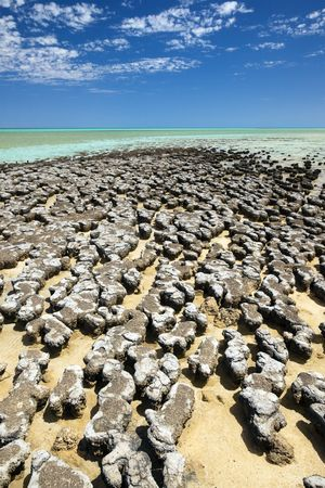 A photography of stromatolites at a sunny beach in Australia