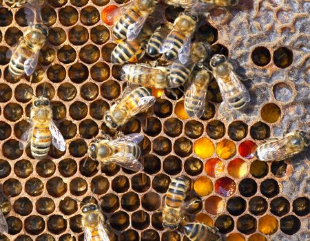 A photography of beautiful little bees in early spring time Stock Photo - 6688633