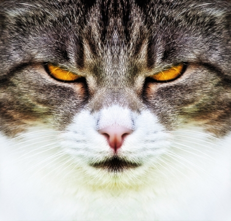 A cat with orange eyes Stock Photo