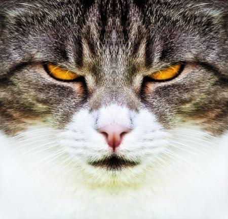 A cat with orange eyes photo