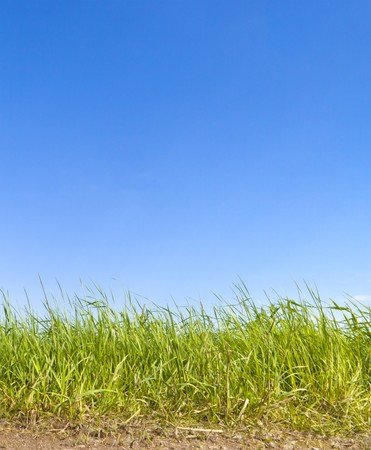 An image of a green grass background Stock Photo - 7072844
