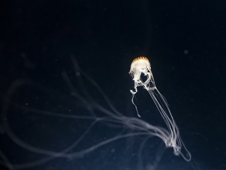 An image of a beautiful jellyfish in the dark photo