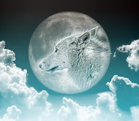 lobo feroz: Una imagen de un lobo agradable en la Luna  Foto de archivo