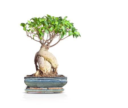 spiritual growth: An image of a nice little bonsai tree
