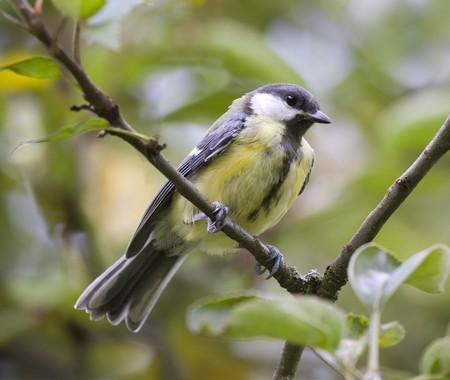 An image of a nice tit bird photo