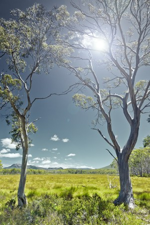An image of green grass landscape in Australia photo