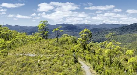 An image of the tasmania rain forest photo