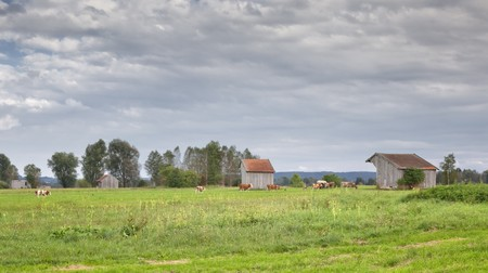 An image of a bavarian landscape with cows Stock Photo - 7740540