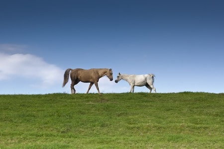 An image of two horses eating grass Stock Photo - 7782154