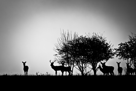 An image of some deer in the morning mist photo