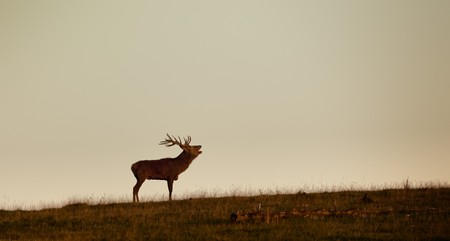 An image of a nice deer in the evening light photo