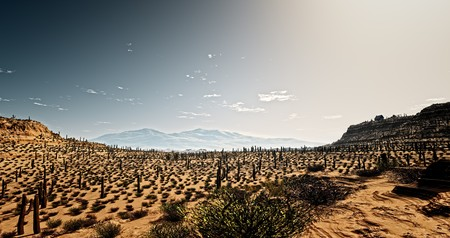 An image of the Arizona desert with cacti Stock Photo - 8077811