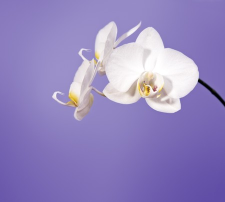 An image of a nice orchid flower photo