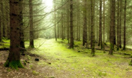 deciduous forest: An image of a nice green forest
