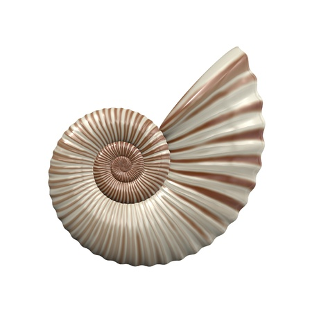 nautilus shell: An image of a nice sea shell