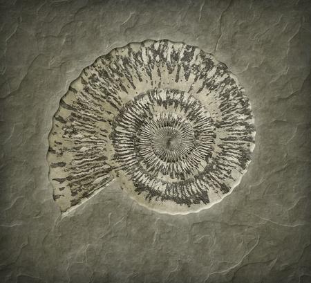 An image of a nice shell petrification photo