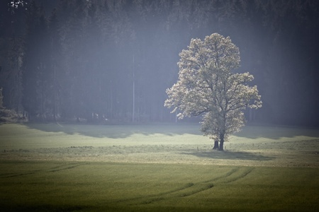 An image of a beautiful forest in bavaria germany Stock Photo - 9409991