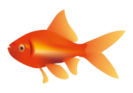 An image of a nice red yellow goldfish photo