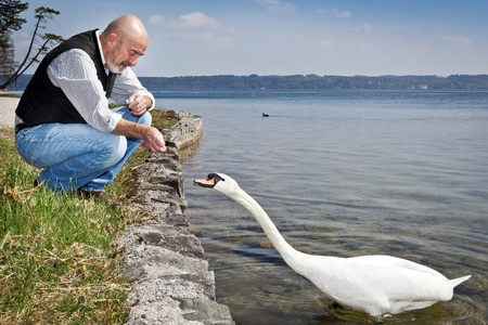An old man with a grey beard is feeding a white swan at the lake Starnberg in Germany Stock Photo - 10588541