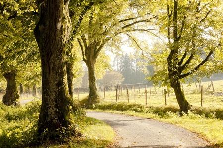 An image of a nice autumn landscape Standard-Bild