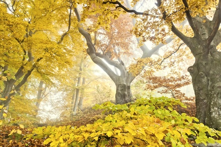 An image of a beautiful yellow autumn forest photo