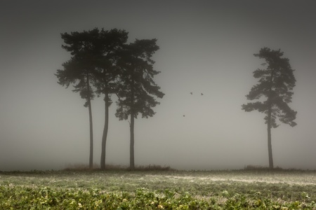 An image of some nice trees with fog in bavaria germany photo