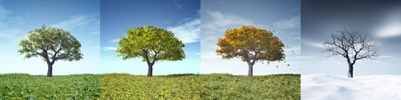 change concept: An image of a nice tree in four seasons
