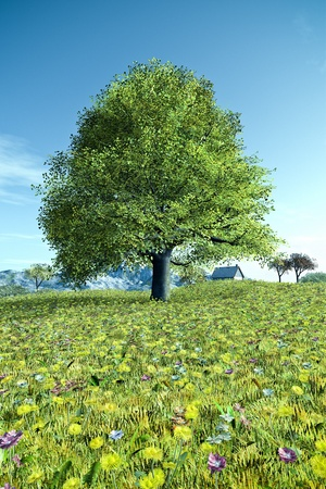 An image of a nice tree in the summer meadow photo