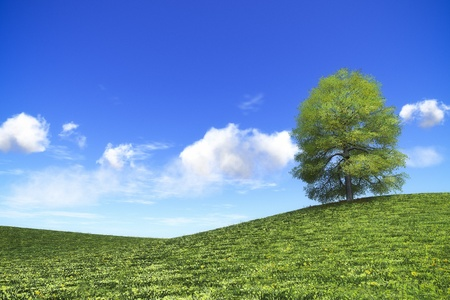 An image of an idyllic green tree under the bright blue sky with space for your content photo