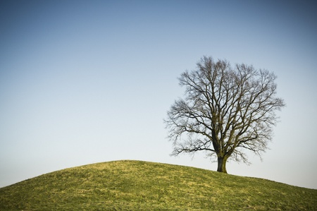An image of a leafless tree on a hill Stock Photo - 12928545