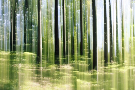 finnish: An image of a forest vertical motion blur background Stock Photo