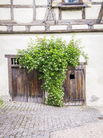 An image of some roses and the old wooden doors photo