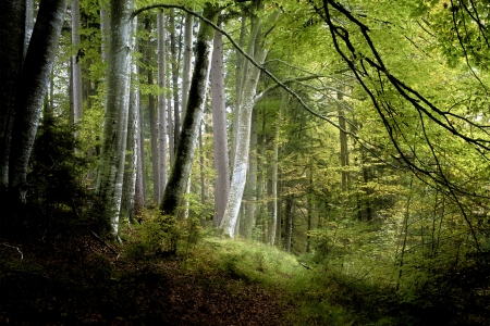 dark jungle green: An image of a beautiful dark forest in bavaria germany Stock Photo