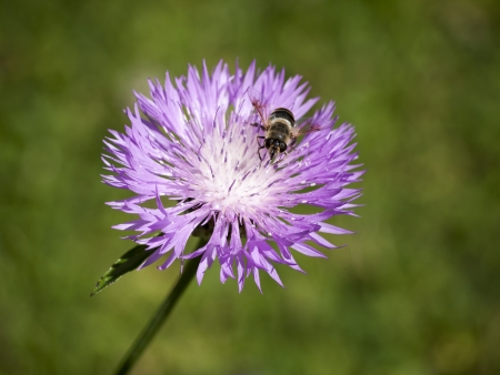 An image of a beautiful little bee on a yellow flower photo