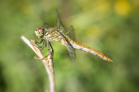 An image of a nice detailed dragonfly photo