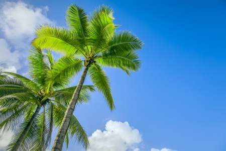 An image of two nice palm trees in the blue sunny sky photo
