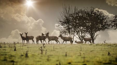 herd deer: An image of a some nice deer in the morning light