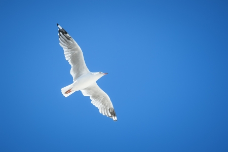 An image of a beautiful seagull in the bright blue sky photo