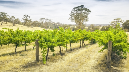 barossa: An image of the Barossa Valley landscape in Australia Stock Photo