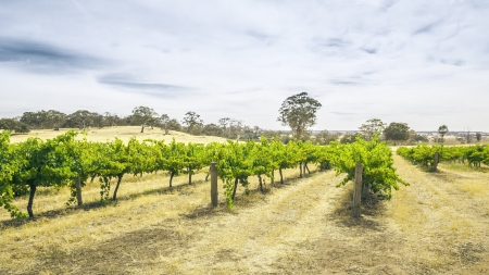 An image of the Barossa Valley landscape in Australia Stock Photo - 17386627