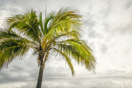 An image of the nice palm tree Stock Photo - 17587470