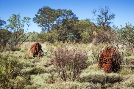 mounds: An image of two australia termite hill