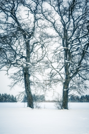 An image of a nice winter tree photo