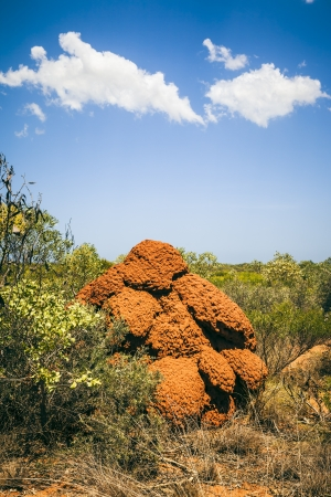 An image of a big termite hill in Australia photo