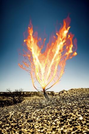 Een beeld van de brandende doornstruik Stockfoto