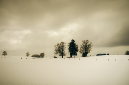 An image of a nice sepia winter scenery photo