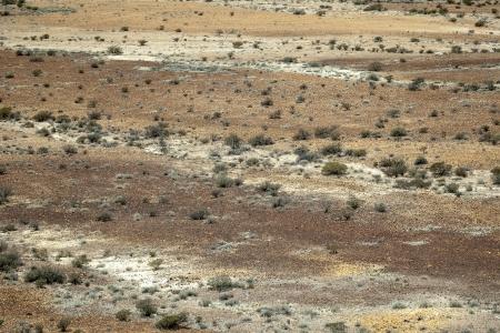 bush pepper: An image of an australian desert background