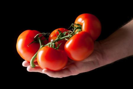 Some red tomatoes in a hand in front of a black background photo