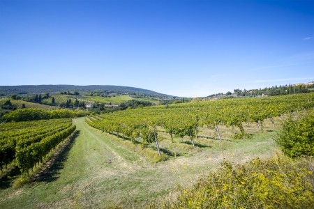 An image of a nice wine hill in Italy photo