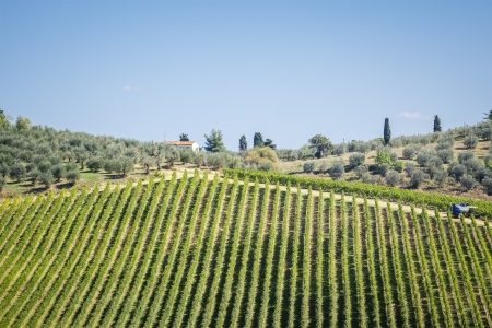 montalcino: An image of a nice wine hill in Italy